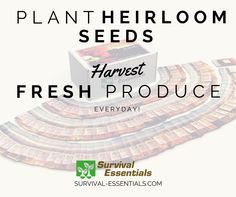 Choose Survival Essentials and grow more heirloom seeds for fresher, tastier, healthier produce.