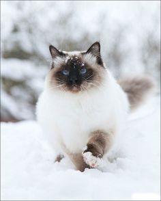 Cats in the snow... precious (more with link)