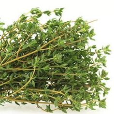 Thyme -- if I could only grow one herb, it would be thyme.
