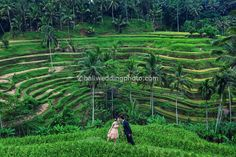 ubud rice terrace - one of iconic location in Bali