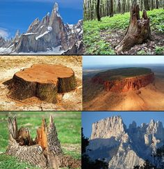 Silicon Trees?  ... trees with that large of a trunk would not have to be 40 miles high. They would be more like huge shrubs only as tall as our tallest buildings. Probably a half a mile to a mile. You don't have to be a flat earther to recognize the same pattern around the world.  What was our world before the human?  http://mirrorspectrum.com/behind-the-mirror/flat-earth-supporter-claims-mountains-are-the-ancient-remains-of-gigantic-silicon-trees