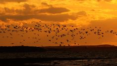 Sunset with birds in Provincetown MA by OneSimpleClick on Etsy, $20.00