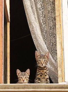 Cat View