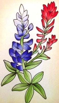 Bluebonnet and Indian Paintbrush Texas wildflowers botanical tattoo. Wildflower Drawing, Wildflower Tattoo, Arm Tattoo, Sleeve Tattoos, Bluebonnet Tattoo, Paintbrush Tattoo, Indian Paintbrush Flowers, Texas Tattoos, Botanical Tattoo