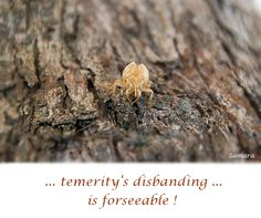 ... temerity's disbanding ... is #forseeable !