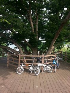 bicycle tour in Korea