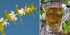 Hluchavka je plevel, který léčí Shot Glass, Glass Vase, Tableware, Home Decor, Dinnerware, Decoration Home, Room Decor, Tablewares, Place Settings