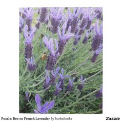 Puzzle: Bee on French Lavender Jigsaw Puzzle