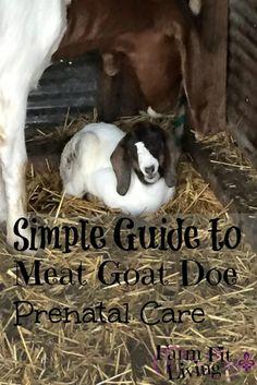 A Simple Guide to Doe Prenatal Care