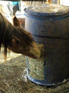 Horse feeder barrel with a piece of no climb mesh. Horse Shelter, Horse Stables, Horse Barns, Hay Feeder For Horses, Horse Feeder, Horse Hay, Horse Love, Horse Care Tips, Horse Treats