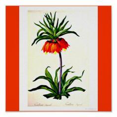 Poster-Botanicals-Pierre Joseph Redoute 10