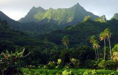 Te Manga the highest peak in Rarotonga Cook Islands. I'd like to give this a shot but not sure I'm fit enough...