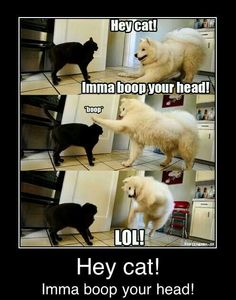 Funny dogs & Dog memes hilarious can't stop laughing Funny animal pictures& fun. Funny Dog Memes, Funny Animal Memes, Cute Funny Animals, Funny Animal Pictures, Cat Memes, Funny Cute, Funny Shit, Funniest Memes, Funny Photos