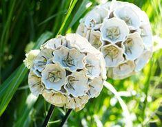 Frances Doherty's Ceramic Flowers