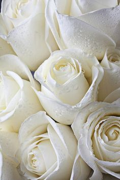 White Roses Via Tumblr