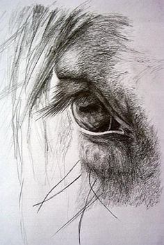 It's in their eyes...some of my favorite photos are the ones I take of a horses eye! by staci