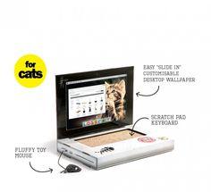 Cat Scratcher Laptop