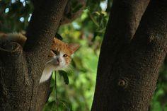 """Me gustaría que mi escritura fuera tan misteriosa como un gato."" Edgar Allan Poe. https://www.flickr.com/photos/llamamemar/14029557681/ #photography #fotografía #spain #nature #Flickr #Cat"