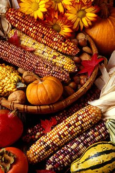 Fall Harvest Photograph by Garry Gay