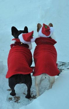 Christmas Dogs.....how do we look at this angle? Cute at every angle!