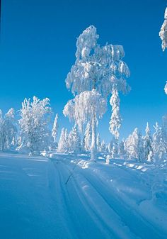 I am going to keep pinning pretty snow pictures until Old Man Winter pays us a good visit here in Michigan!  :o)