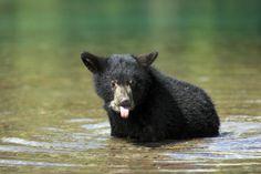 Us or Them: Was the Killing of a Local Three-Legged Bear Really Necessary?