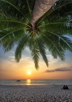 Tropical Beaches With Palm Trees Beautiful Sunset, Beautiful Beaches, Surf Mar, Tropical Beaches, Beach Scenes, Tropical Paradise, Beach Pictures, Belle Photo, Amazing Nature