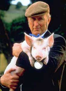 """Babe"" a pig raised by sheepdogs, learns to herd sheep with a little help from Farmer Hoggett. Starring James Cromwell and Christine Cavanaugh as the voice of Babe. ""That'll do pig. Babe The Movie, I Movie, Movie Stars, This Little Piggy, Little Pigs, Babe 1995, Rachel Griffiths, James Cromwell, The Villain"