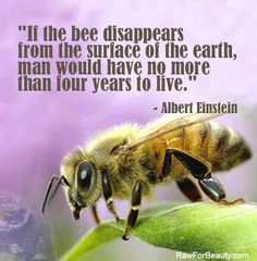 This is a real threat everyone. Bees are dieing out. Whole colonies have disappeared all over the world.  Please use chemicals responsibly.  Natural is better for our environment. RESPECT THE BUZZ