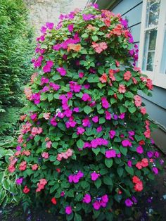"""This is my impatiens tree which I water exclusively with Beat Your Neighbor Plant Food. It's a whiskey barrel on the bottom with three more tiers of graduated pots. It's in the front window and makes me smile. Thanks for such a great product! I use it on all my hanging baskets and pots too."" - Sue S. Thank you for sharing with us Sue!"