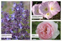 """Gemeinsam mit dem Magazin """"Lust auf Natur"""" haben wir dieses Beet entwickelt: Terrassenflächen schön zu umpflanzen ist manchmal gar nicht so… Clematis, Wisteria Sinensis, Flowers, Plants, Astrantia, English Roses, Climbing Roses, Climbing Vines, Plant"""