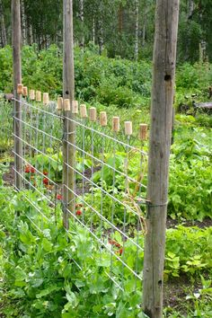Garden plants, vegetable farming, terrace garden, garden projects, garden i Garden Trellis, Garden Fencing, Garden Cottage, Terrace Garden, Vegetable Garden, Garden Landscaping, Balcony Gardening, Garden Plants, Vegetable Farming