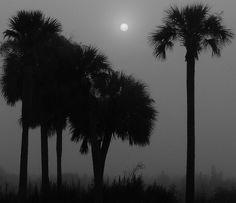 hazy, hot, and humid by joiseyshowaa, via Flickr