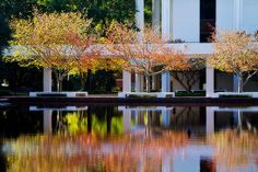 Fall at Clemson Library by froglover.1979, via Flickr