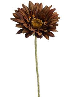 Gerbera Daisy in Chocolate