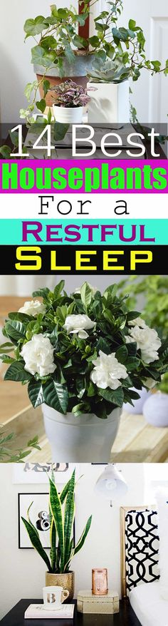 14 Best Houseplants for a Restful Sleep - House Plants - ideas of House Plants - Plants grown indoors bring nature into the home but do you know there are plants that can help you sleep better? 14 Best Houseplants for a Restful Sleep. Take a look!