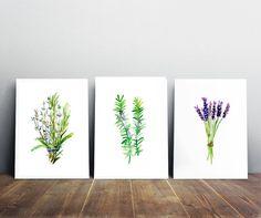 Kuiden set  3 prints  Rozemarijn lavendel aquarel  door Zendrawing