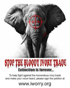 the ivory trade is getting out of hand and may make elephants extinct Buy elephant destiny:  on the other hand, the anecdotes about elephants and  impetus to the exploration of africa and most importantly of all the ivory trade.