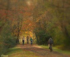 Bike the Virginia Creeper Trail.