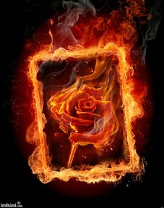 Im sending you this Rose  .Because my heart is on Fire for you .