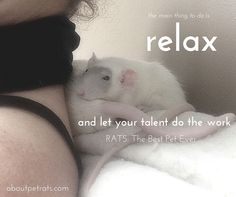Let your talent do the work #rats #canvacup