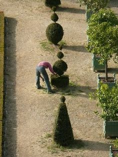 Outside the Orangerie at Versailles Topiary Garden, Topiary Trees, Boxwood Garden, Formal Gardens, Outdoor Gardens, Versailles, Landscape Design, Garden Design, Bonsai