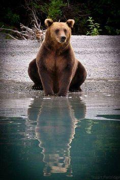 1c5818ea139 Big Bears Teaching Their Teddies How To Bear