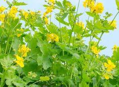MindenegybenBlog Herb Garden, Health And Beauty, Herbalism, Nature, Plants, Google, Herbal Medicine, Naturaleza, Herbs Garden