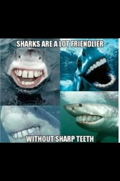 Sharks More