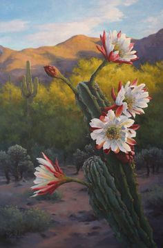 Oil painting of night blooming cactus by artist Lucy dickens. Cactus Painting, Cactus Art, Cactus Flower, Flower Art, Cacti And Succulents, Cactus Plants, Indoor Cactus, Landscape Art, Landscape Paintings