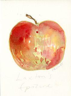 Watercolour Laxton's Epicure apple