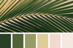Color Frond