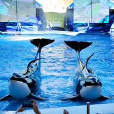 Seaworld Orlando: I cannot see this without noticing the fins. #Blackfish #NotMeantToBeInPools