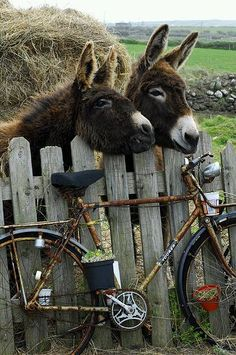 You sit on the handle bars and I'll pedal